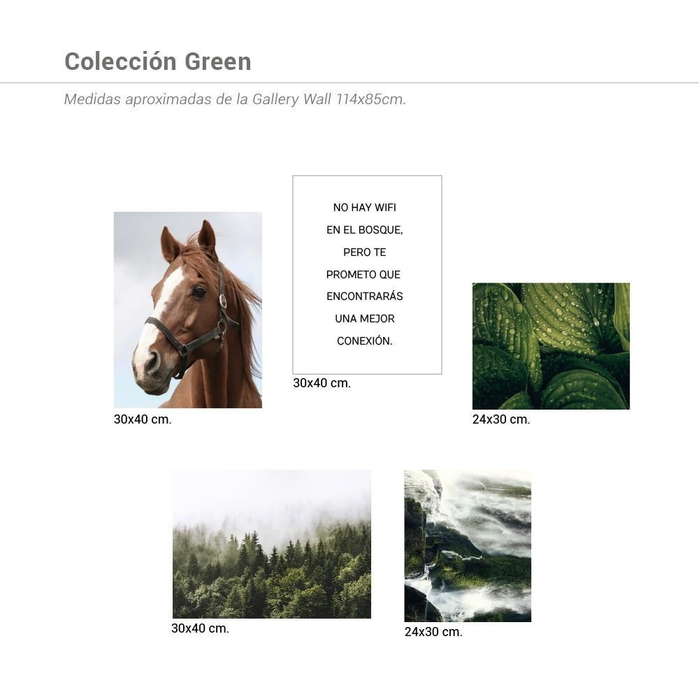 Colección Green